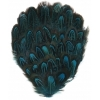 Feather Pad Pheasant 8-10cm Turquoise